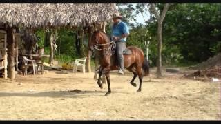 Rockamball ( Centauro del Limon x Serenata Sin Luna), 38 meses