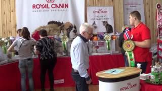 Шоу норвежских лесных кошек, 5.04.2014, Новосибирск