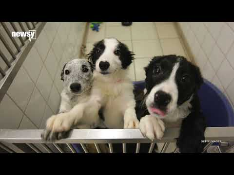 England to ban puppy, kitten sales at pet stores