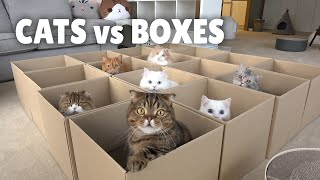 Cats vs Boxes