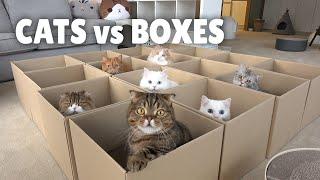 Cats vs Boxes