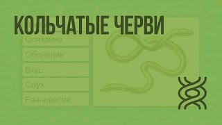 Кольчатые черви. Видеоурок по биологии 7 класс