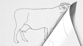 How to draw a COW step by step.