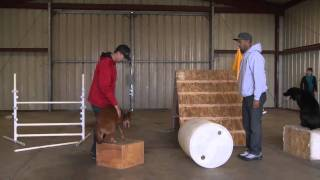 Cali K9: A Day In Cali K9 Dog Training Life: Episode 2 - Dog Training San Jose, Bay Area #calik9