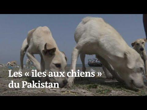 Des chiens abandonnés survivent sur des îles désertes au Pakistan