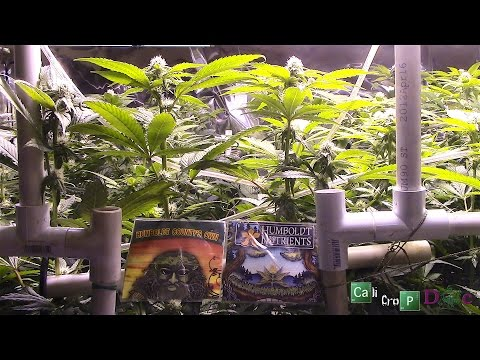 Humboldt County's Own vs Humboldt Nutrients The Great Grow Off Match 3 ep 1