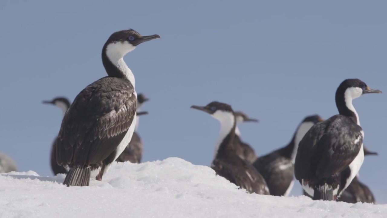 【動画】南極の野生生物