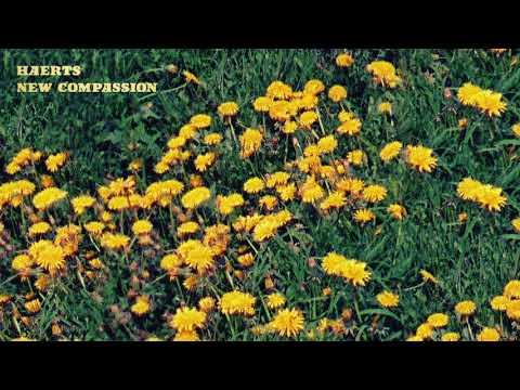 Haerts - New Compassion (Official Audio)