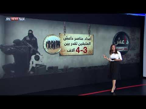 داعش.. خطر مستمر  - نشر قبل 6 ساعة