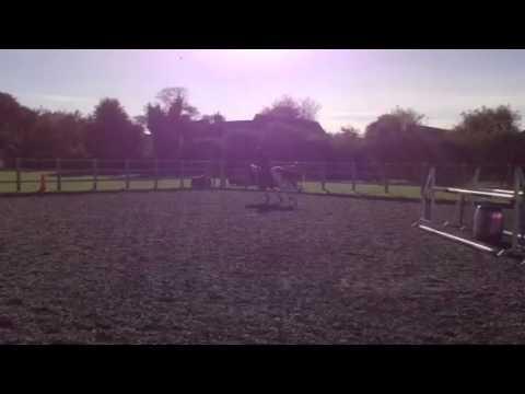 Jumping schooling at home 24/10/13 Wanda and Nikki