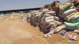 بالصور.. لجنة حكومية تكشف سقوط صاحب شونة لتخزين القمح تابع للشركة القابضة للصوامع