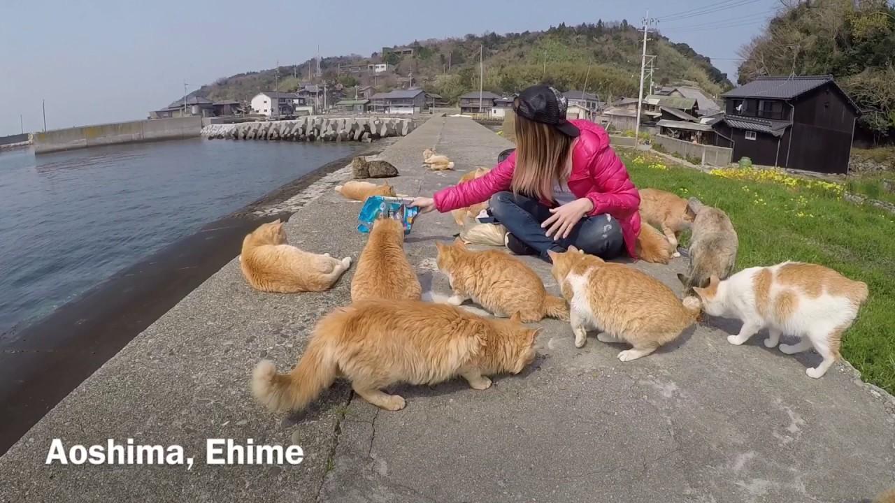 Aoshima Cats Island Ehime Youtube