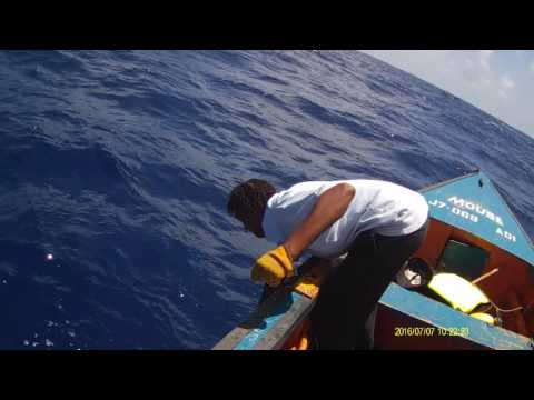 Dominica Yellowfin Tuna Fishing without rod