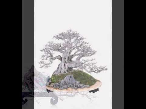 Rick Wu Lingnan Bonsai Photo Gallery 3 中國嶺南盆景相片集3
