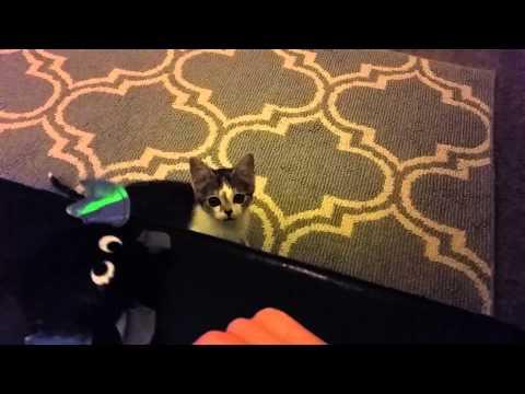Special Needs Foster Kitten Can't Jump!