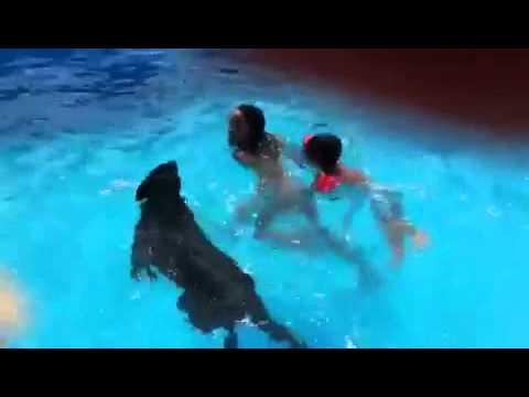 Ni os y pastor alem n en la piscina de la residencia for Piscina bebes madrid