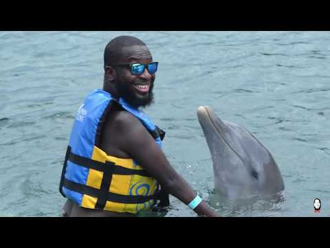 Swimming with Dolphins, Ocho Rios Jamaica