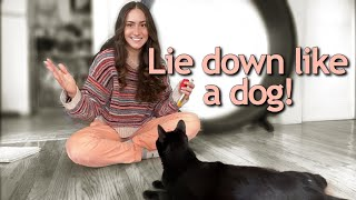 Teach Your Cat to Lie Down