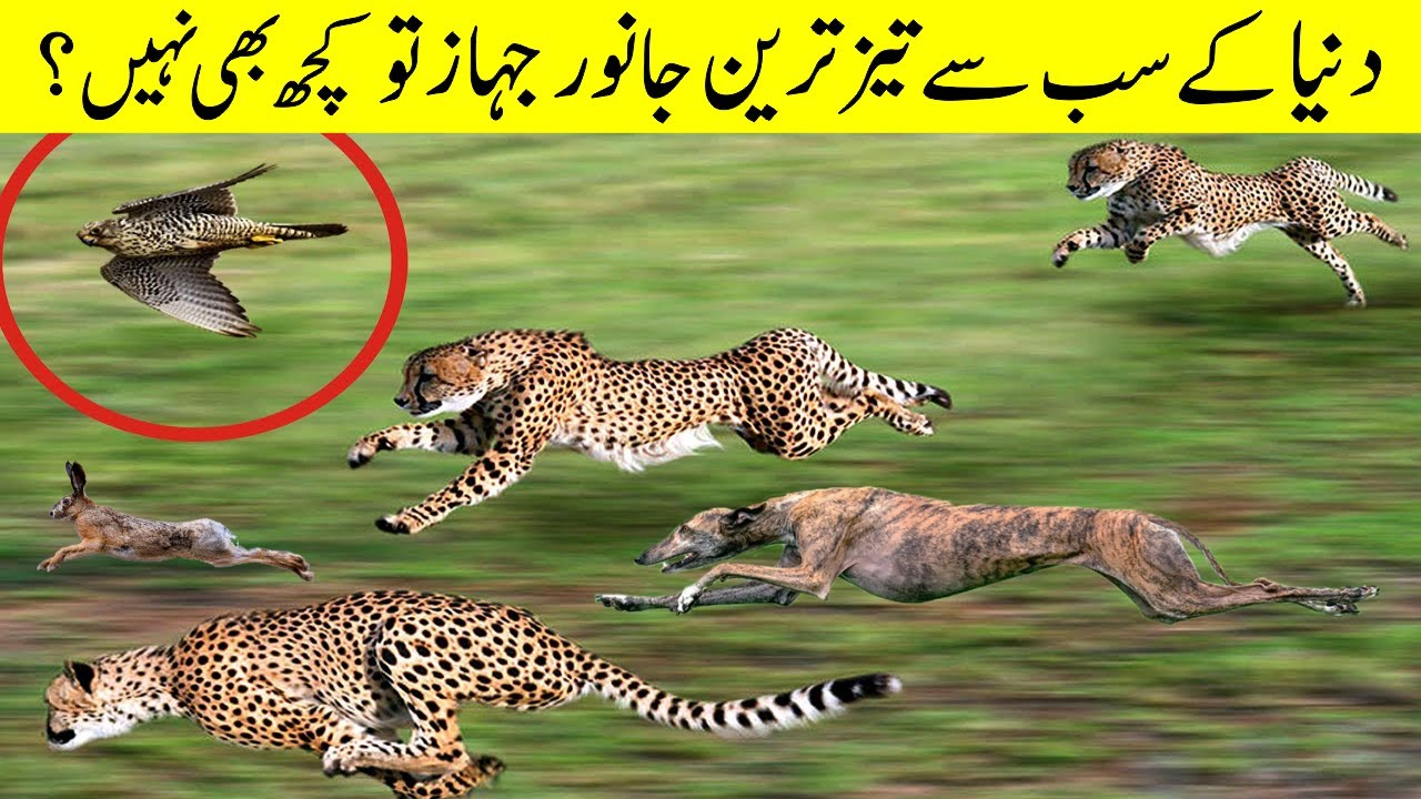 You can't Believe How Fastest These Animals are