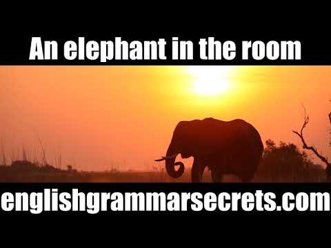 An Elephant in the Room Expression.  Idioms to Make Your English Natural