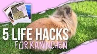 5 LIFE HACKS für Kaninchen