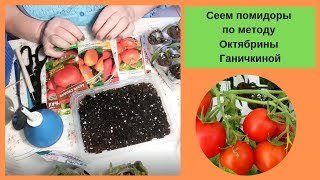 Сеем помидоры по методу Октябрины Ганичкиной