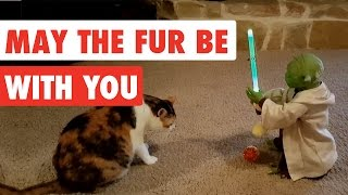 May The Fur Be With You | Funny Star Wars Pet Video Compilation Edition 2017