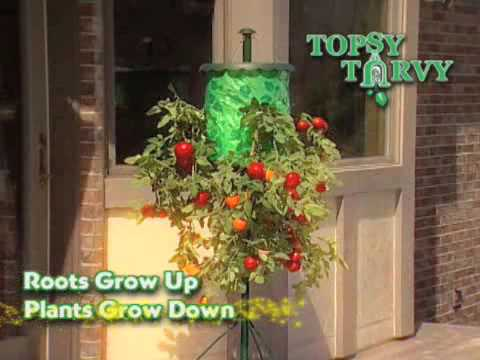 Topsy Turvy Tomato Tree As Seen On Tv Network