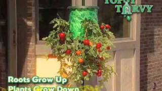 Topsy Turvy Tomato Tree - As Seen on TV Network