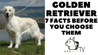 Before yo buy a dog  GOLDEN RETRIEVER  7 facts to consider!  DogCastTV!