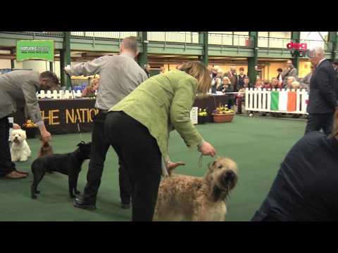 National Terrier 2017 - Best in Show FULL