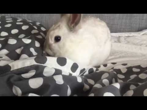 Pip het konijn mag even op bed – Dierenoppas Amersfoort