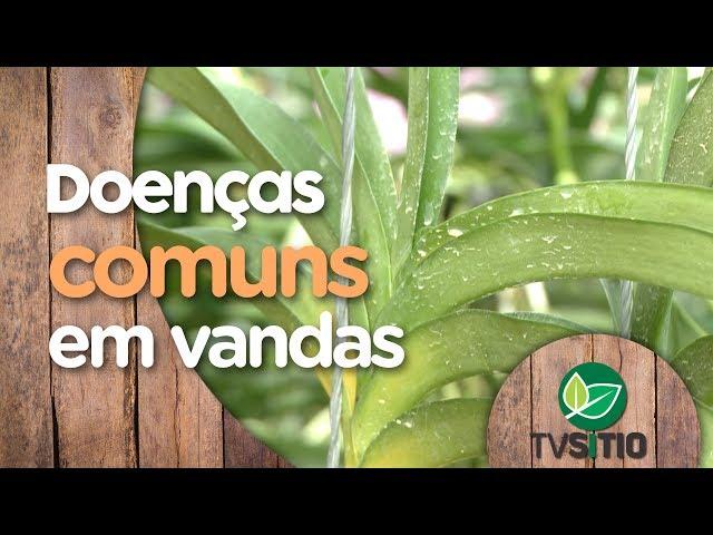DOENÇAS COMUNS EM VANDAS