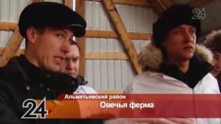 Фермер из Альметьевского района содержит отару из 600 овец