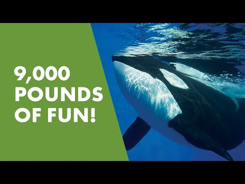Meet Kyuquot   SeaWorld