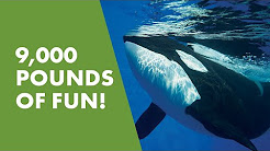 Meet Kyuquot | SeaWorld