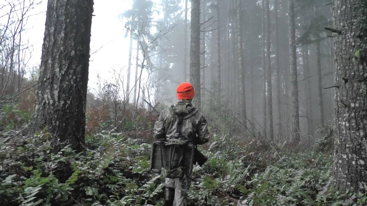 The Black Forest Germany >> Grey Ghost of the Forest - Blacktail Deer Hunt - YouTube