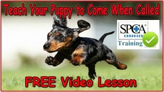 ☼ ☼ ☼ Teach Your Puppy To Come When Called ♥ Must See! ♥ Train A Dog To Come When Called
