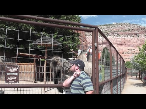 I kissed a camel and I Liked it!!  I hope Gypsy Lynn Don't Mind it!