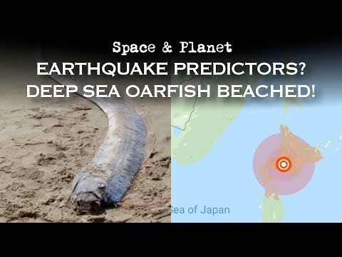 Impending Japanese Earthquake? Deep Sea Oarfish Beached | Space And Planet