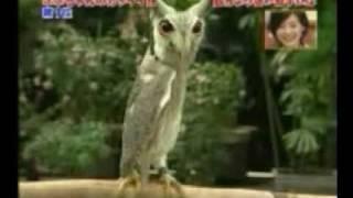 爆笑變形貓頭鷹 完整版