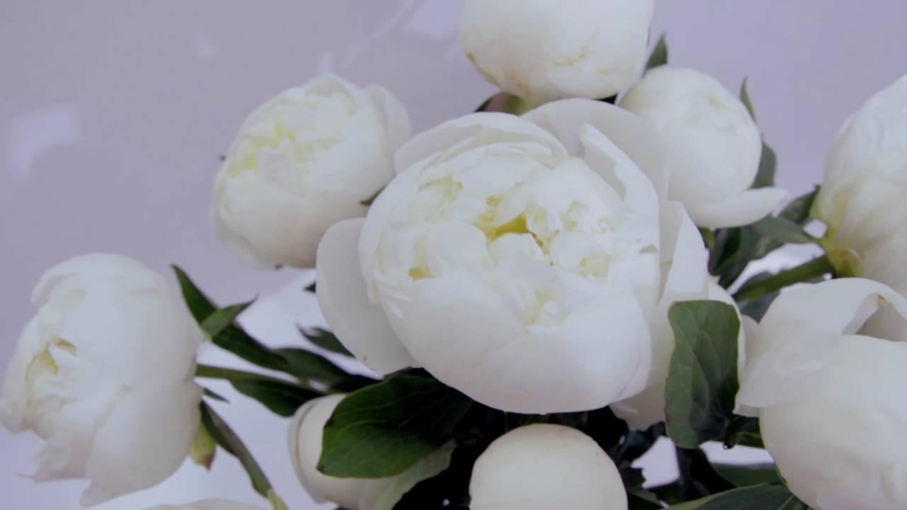 Каталог садовых сортов лилий для открытого грунта с фото и описанием. До 15-го августа идет прием заказов на осень-2018 на луковицы лилий.