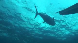 """""""Pesca Sub na América Central"""" por Diego Santiago"""