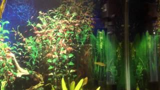 38 gallon aquarium with community fish