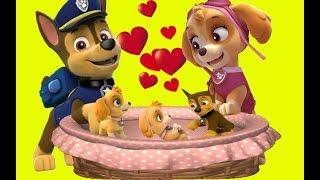 Psi Patrol Po Polsku Bajki Dla Dzieci   Zabawna Dla Dzieci   Psi Patrol Po Polsku 2018 Odcinki 9
