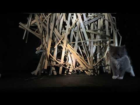 Paul Romano On Withered's Verloren Album Art Concepts & Processes