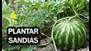 Como Plantar Sandias En El Huerto || Cultivar Ecológico || La Huertina De Toni