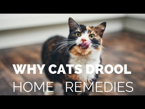 Why Your Cat Is Drooling, And What You Can Do About It