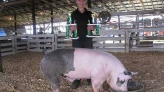 My 4-H Swine Project 2011