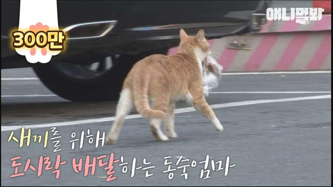 Hasil gambar untuk dongsuk stray cat